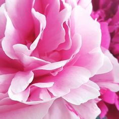 ♡ Pfingstrosen-Liebe ♡  Heute stelle ich euch kein Rezept vor, heute zeige ich euch meine Lieblingsblümchen.🌸 Wer liebt diese wunderschönen Blumen genauso sehr wie ich?  #fraeuleinsommerfeld #pfingstrosen #peony #lieblingsblumen #rosa #pink #weiß #liebe #pfingstmontag #blumenliebe #nofoodtoday #recipes #foodblogfeed ##foodbloggers #foodblog_liebe #foodblog_stuttgart #foodblog_de Flowers, Plants, Pink, Garden, Wonderful Flowers, Pentecost, Stuttgart, Recipe, Summer Recipes