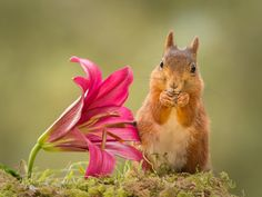 Photo be flowered by Geert Weggen on 500px