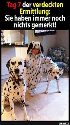 Besten Bilder, Videos und Sprüche und es kommen täglich neue lustige Facebook…