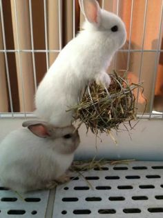 🐇The Rabbit gift idea guide - How to choose a gift for a bunny lover! Cute Baby Bunnies, Funny Bunnies, Cute Babies, Cute Little Animals, Cute Funny Animals, Rabbit Eating, Bunny Care, Fluffy Bunny, Animal Facts