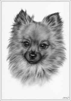 ACEO Print Pomeranian Dog Animal Cute Sweet Puppy Love Pet Canine Zindy Art