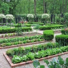 Small Vegetables Garden for Beginners_25