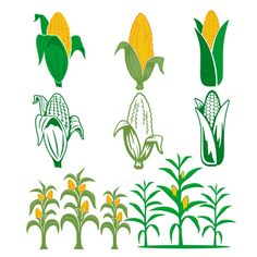 Corn Pack Cuttable Design SVG Cuttable Design Cut File. Vector, Clipart, Digital Scrapbooking Download, Available in JPEG, PDF, EPS, DXF and SVG. Works with Cricut, Design Space, Cuts A Lot, Make the Cut!, Inkscape, CorelDraw, Adobe Illustrator, Silhouette Cameo, Brother ScanNCut and other software.