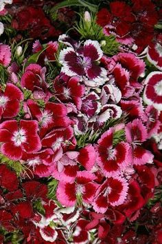 Journal Flowers Pretty Pink Dianthus: (Notebook, Diary, Blank Book) (Flower Photo Journals Notebooks