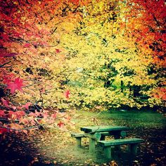 Park bench in the autum woods...