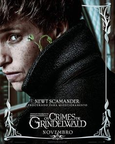 24 Best newt scamander images in 2019 | Fantastic Beasts, Harry