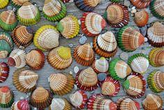 Painted Sea Shells Beach Decor Summer Decor Table