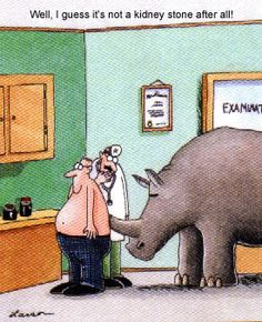 Multiple Sclerosis drugs and my first neurologist Kidney Stones Funny, Kidney Stone Humor, Gary Larson Far Side, Gary Larson Cartoons, Radiculopathy, Far Side Comics, The Far Side, Haha Funny, Funny Stuff