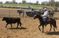 Image result for campdrafting quotes