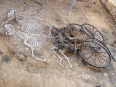 Thracian tomb with four-wheel chariot with a team of two horses and a dog, opened in autumn 2008. The chariot features large wheels - diameter 1.20 m - the traces of wood give an idea of its structure and overview. Impressive is the decoration of bronze trim of the body of the car and with very richly decorated harness.