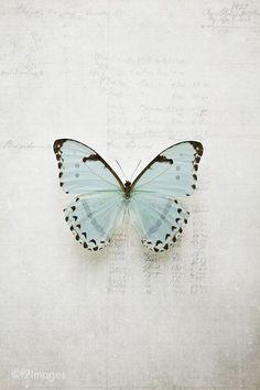images photography ~ gorgeous Morpho butterfly on metallic paper Morpho Butterfly, Blue Butterfly, Butterfly Wings, Butterfly Sketch, Butterfly Wall Art, Blue Bird, Mary Elizabeth, Beauty Butterflies, Beautiful Butterflies