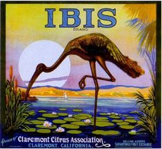 Claremont Ibis Bird Orange Citrus Fruit Crate Label Art Print | eBay Vintage Prints, Vintage Art, Vintage Signs, Vintage Food, Vintage Labels, Vintage Postcards, Orange Crate Labels, Vegetable Crates, Ad Art