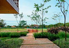 Moitas de capim fazem o jardim parecer uma planície intocada - Casa
