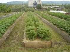 Záhrada Igora Ljadova - OZ Biosféra Growing Vegetables, Permaculture, Cozy House, Vegetable Garden, Gardening Tips, Garden Landscaping, Garden Design, Vineyard, Country Roads