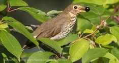 Environmental Issues, Habitats, Wildlife, Bird, Birds