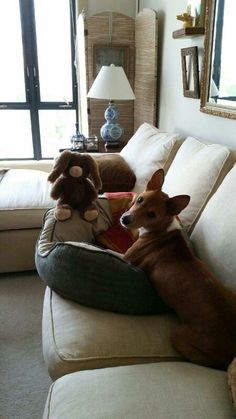 Elliott and his bunny