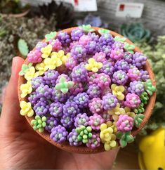 We have to admit, we almost thought these clay succulents were real! ⁠ ⁠ What do you guys think of clay succulents? Would you buy them, or would you rather spend your money on real succulents? Growing Succulents, Cacti And Succulents, Planting Succulents, Cactus Plants, Succulent Seeds, Succulent Gardening, Succulent Care, Pink Succulent, Indoor Garden