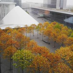 Autumn in luxembourg | philharmonie | vsbl photography