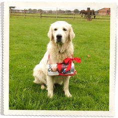 Unser Bürohund Pina beim Austragen des neuen Winterkataloges :-) #deerberg #katalog #neu #hund #dog