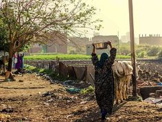 Warraq island , Egypt - a woman carrying a pot on her head and on the way to the field in order to help her husband in Agriculture. Photo by / Fayed El-Geziry