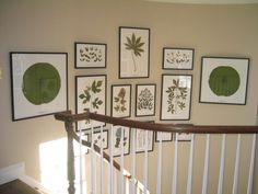 Becky Davis Botanicals, LLC - recent pictures