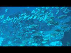 Under The Ocean, Camera Phone, Appar, Youtube, Cuba, Nature, Youtubers, Camera, Youtube Movies