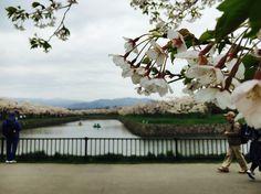 #Goriokaku cerezos florecidos #Japón