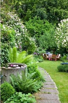 Narrow garden with flowering cascades of climbing roses next to a garden path, a water basin and garden furniture on a lawn. Rosa 'Constance Spry', 'Lykkefund' and 'Venusta Pendula'