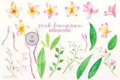 Pink Frangipani Clip Art Watercolor