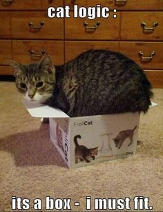 My cat does this all the time! And instead of play what was in the box play with the box, duh, what else would you do?