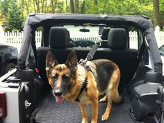 Dog Harness and Attachments - Jeep Wrangler . thats why i love jeep. i can bring my dog anywhere I'am and whatever sizes Accessoires De Jeep Wrangler, Accessoires Jeep, Jeep Wrangler Accessories, Jeep Jk, Jeep Truck, Ford Trucks, Jeep Wrangler Forum, Jeep Wrangler Sahara, Forum Jeep