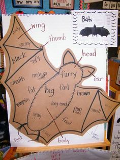 Learning the science of the Parts of a Bat while reviewing adjectives!