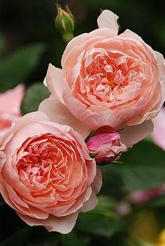 9Pines nuevos para tu tablero Flores y plantas