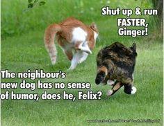 Run, Ginger, run!