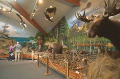 Natural history museum New York. English Channel, Museum Displays, Natural History Museum, Cathedrals, Elk, Dollhouse Miniatures, Theatre, Scale, Heaven