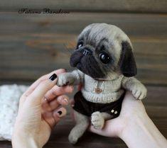 Mini Pug Micro Pug Teacup Pug Teacup Pug Puppies For Sale Teacup