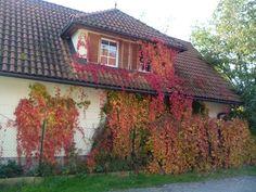 Podzimní barva listí. Místo Rájecke Teplice, Slovenská republika