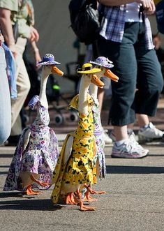 Ducks in Dresses <3 ABSOLUTELY COULD NOT BE MORE DOMESTIC ~ BWAHAHA