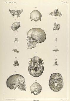 Anatomie normale du corps humain: atlas iconographique de XVI planches, Sigismond Laskowski.