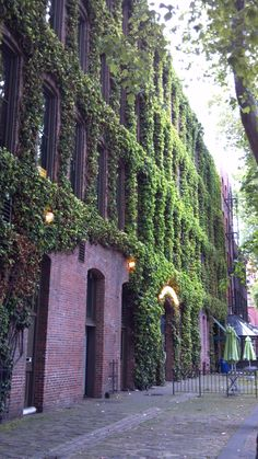 Ivy covered wall in Occidental Park, Seattle, WA