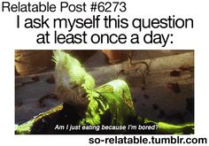 I ask myself this question at least once a day - am I just eating because I'm bored Funny Quotes, Funny Memes, Hilarious, Dog Memes, Funny Gifs, Stupid Funny, Le Grinch, Teen Posts, Im Bored