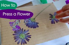 how to press a flower - TinkerLab --- Creative Experiments for Kids