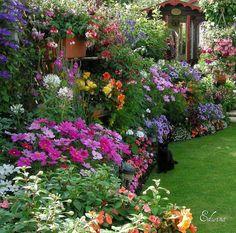 Quintessential English flower border. Taken in Bir...