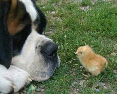 St Bernard Dog | What a St. Bernard Dog Can Bring To Your Family?