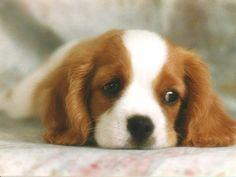 Yüksek sesler, kalabalık ve çocukların onu sevmek için yakalamaya çalışmaları gibi faktörler ilk günlerde köpeğinizin korkmasına neden olabilir.