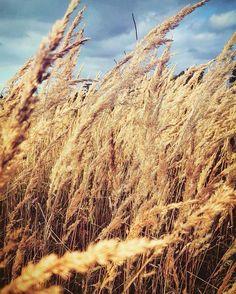 Tak ładnie dziś było na  #photography #photographer #photoshoot #photo #instaphoto #instafollow #instagram #instaphotography #photooftheday #onlygoodvibes #goodvibes #summer #goodweather #sunny #sunnyday #instagood #ilovethatplace #zdjecie