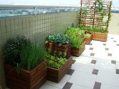 - Confira dicas para fazer uma horta no apartamento