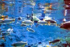 grande variedades de especies de peixes em Bonito