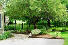 Apple tree in yard
