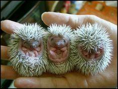 OMG!!!!!  THEY'RE SO FREAKING CUTE!!!!!!!!!!!!!!  BABIES!!!!!!!!!